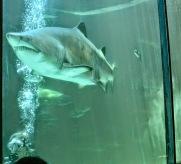 Erin and a shark.