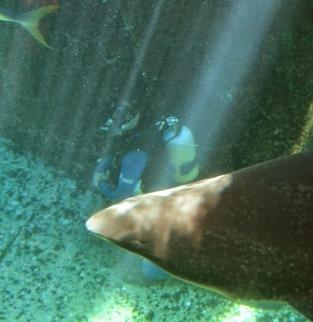 Dan and a shark.
