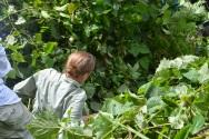 Trekking through the bush.