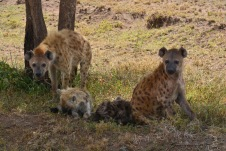 The hyenas blocking the bathroom probably looked like these, but they seemed much less cute.