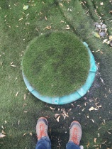 Russia Cover with grass in a park