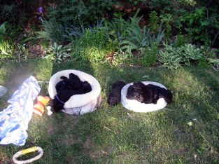 bigger pups outside piled in beds