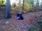 nov. arboretum